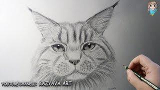 Как нарисовать с помощью циркуля кошку породы МЕЙН-КУН поэтапно. Урок рисования.