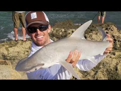 Highlights from live Shark Fishing show with Kanalgratis