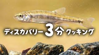 ディスカバリー3分クッキング   大便で釣った魚のスープ   (ディスカバリーチャンネル)