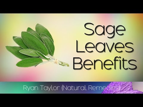 Sage Leaves: Benefits and Uses