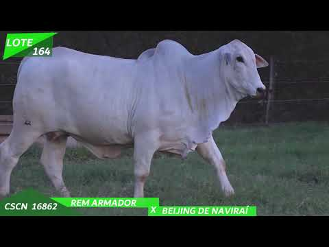 LOTE 164 A
