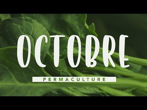 Que faire dans son jardin permaculture en Octobre    #permaculture
