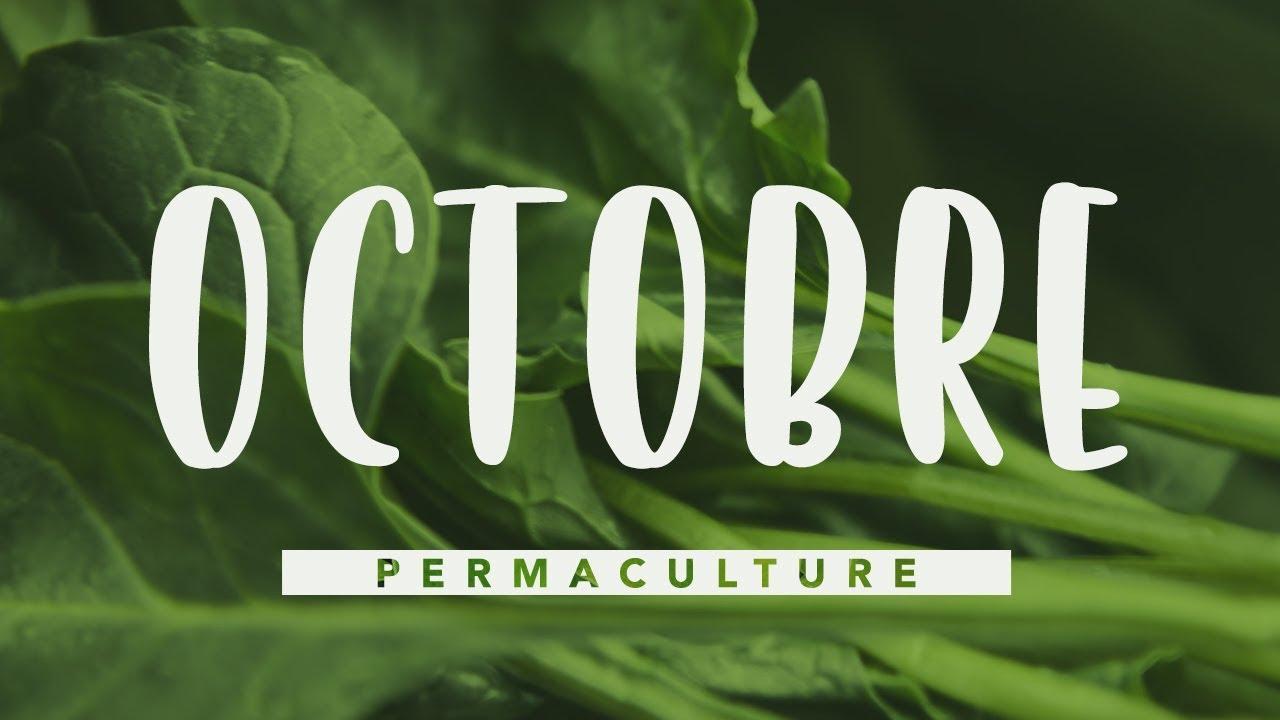 Quoi Planter En Octobre que faire dans son jardin permaculture en octobre #permaculture