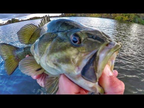 Fall Evening Fishing Smallies