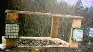 Bird Table Timelapse