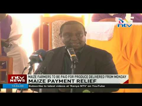 Maize farmers to be paid for produce delivered from Monday -Agriculture PS