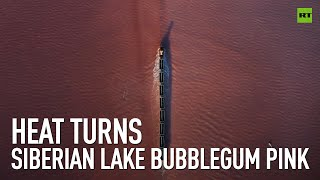 Heat turns Siberian lake bubblegum pink