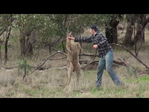 None -  Watch: Man Punches Kangaroo In The Face To Save His Dog
