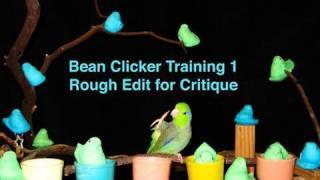 Clicker Training - Beanie Boy 1