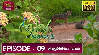 Sobadhara - Sri Lanka Wildlife Documentary | 2019-05-10 | Invasive Plants in Sri Lanka Thumbnail