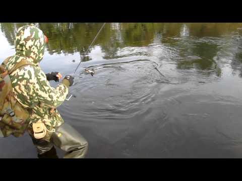 ловля жереха днепропетровск