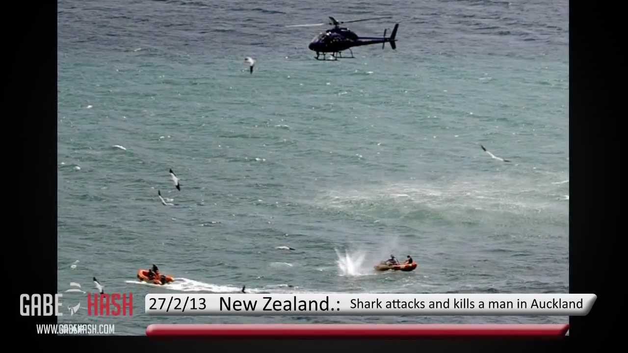 New Zealand Attack News: SHARK ATTACKS AND KILL A MAN IN AUCKLAND MURIWAI, NEW