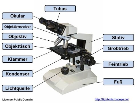 Aufbau lichtmikroskop Übung als pdf download youtube