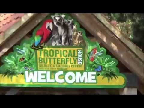Sheffield Tropical Butterfly - House Walkthrough