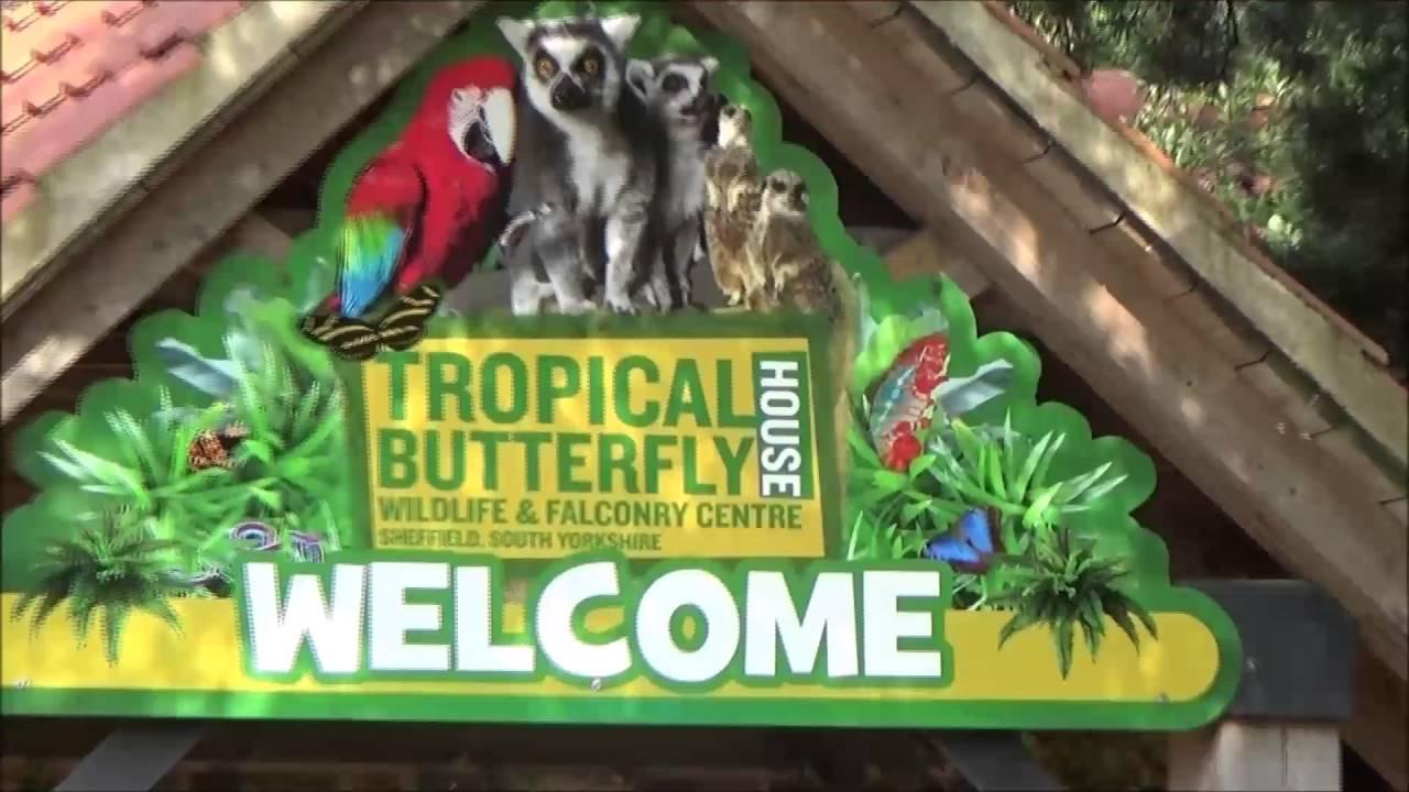 Best Kitchen Gallery: Sheffield Tropical Butterfly House Walkthrough Youtube of Tropical Butterfly House  on rachelxblog.com