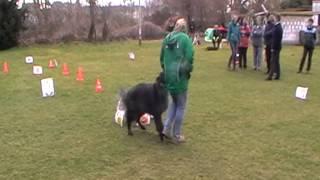 Rally Obedience Beginner Training