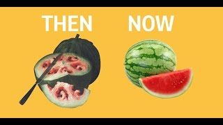 What fruits and veggies looked like before we domesticated them