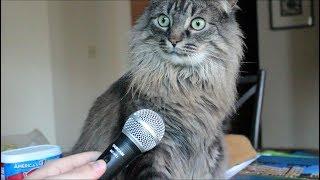 Говорящие и поющие коты!  Talking and singing cats!