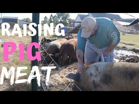 Raising BACKYARD Pigs The Easy Way
