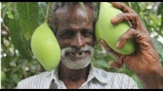 Hintli Dayı Ham Mango'yu Tuz Ve Kırmızı Biberle Terbiye Ediyor!