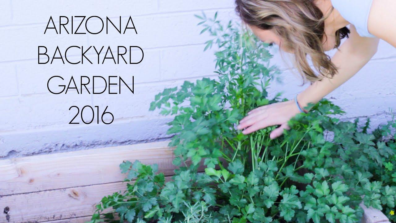 arizona backyard garden 2016 youtube