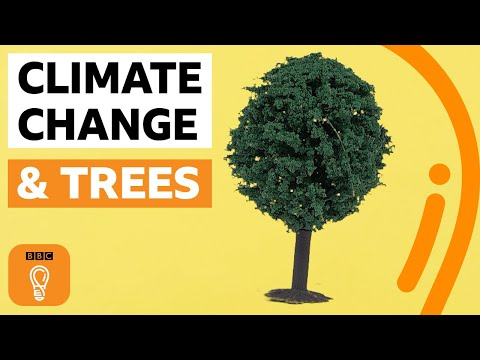 What if everyone planted a tree? | BBC Ideas