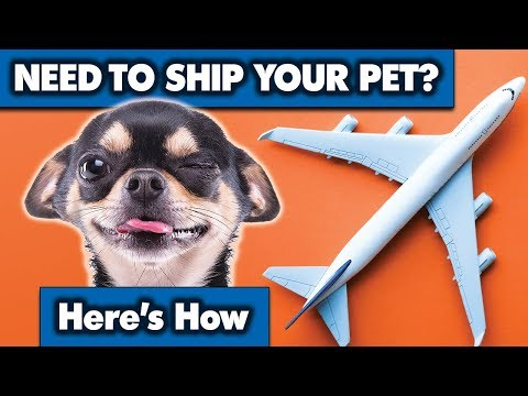 Shipping Your Pet Is Easier Than You Think | Sweetie Pie Pets By Kelly Swift