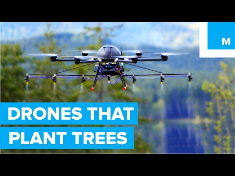 How Drones are Helping to Plant Trees - A Cleaner Future