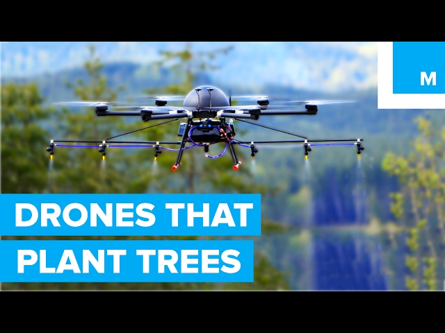 How drones are used to plant forests