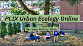 PLIX Urban Ecology Online