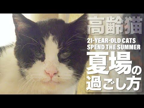 高齢猫の夏場の過ごし方