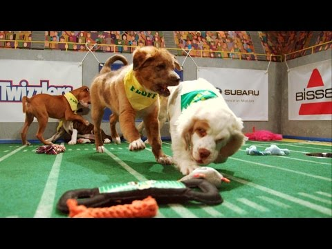 Two Touchdowns in Two Minutes! | Puppy Bowl XI