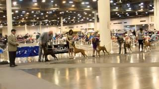 Doug At Houston, Tx Akc Dog Show