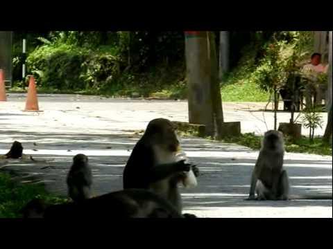 Monkey Token A Milk Bottle.mp4