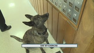 UW K9 Exercise 10pm 01/28/2016(, 2016-01-29T07:45:36.000Z)