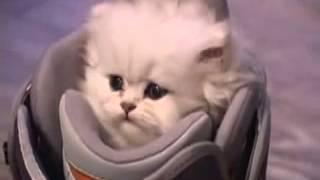 маленький котенок. little kitty. cat