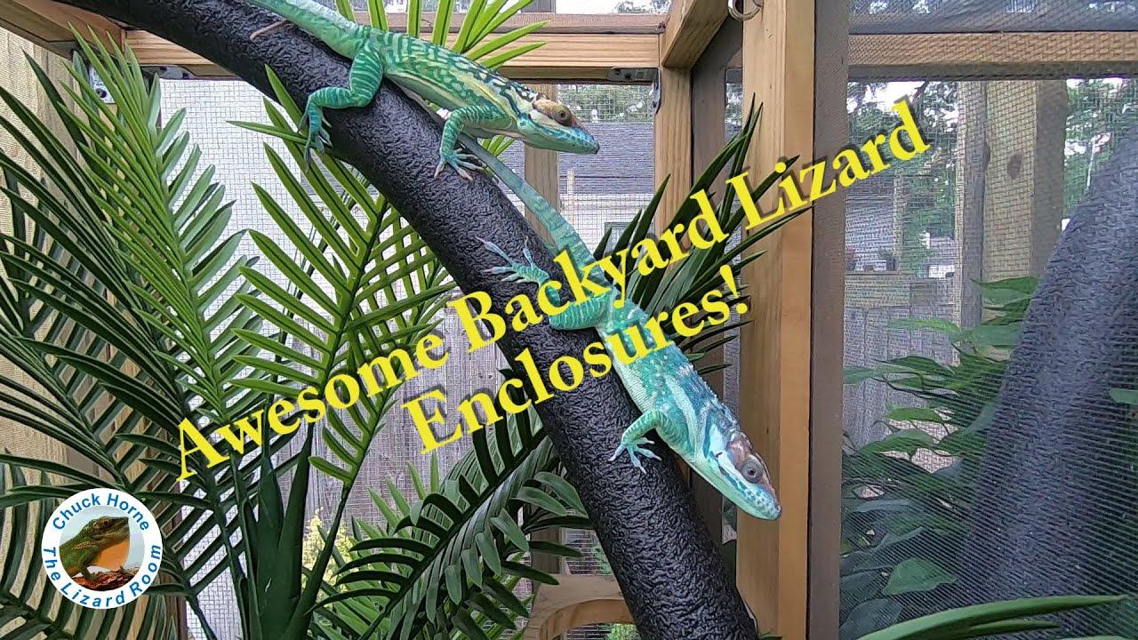 My backyard lizard porch! - YouTube
