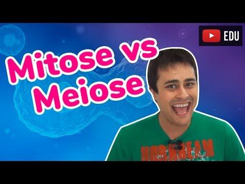Mitose vs. Meiose - Divisão Celular - Prof. Paulo Jubilut