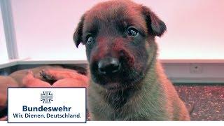 Vom Welpen zum Diensthund der Bundeswehr Teil 1 / 5