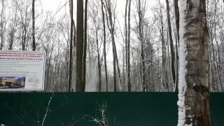 видео Вырубка и рубка деревьев в Москве и Московской области