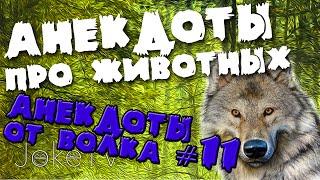 Анекдоты про животных. Анекдоты от Волка #11