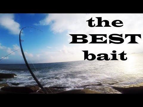 the SECRET to Jetty Fishing