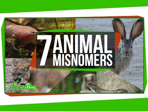 7 Animals That Aren't What We Call Them