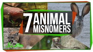 7 Animals That Aren't What We Call Them by : SciShow