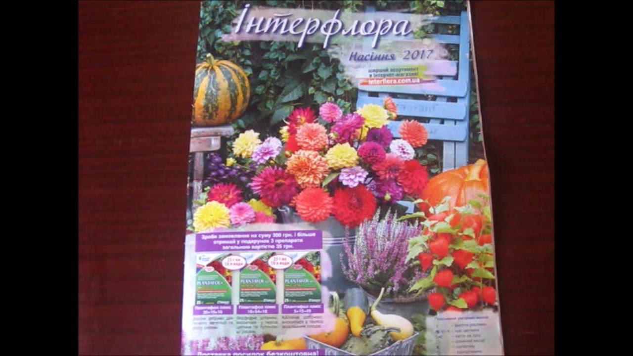 Покупайте семена эустомы (лизиантуса) по низким ценам в нашем интернет -магазине, фото, отзывы, советы специалистов | semena. In. Ua.