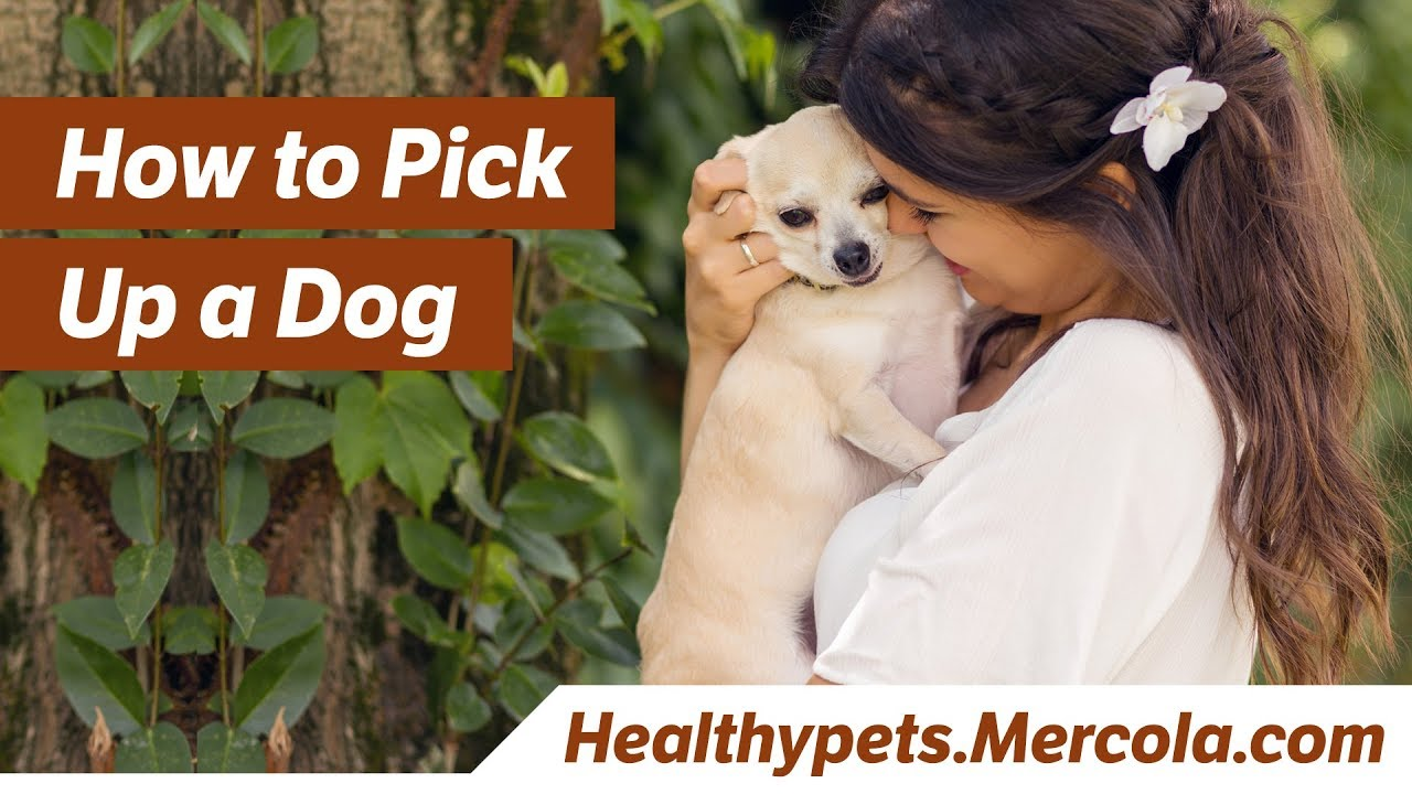 Do You Make These Common Mistakes When You Pick Up Your Pet?