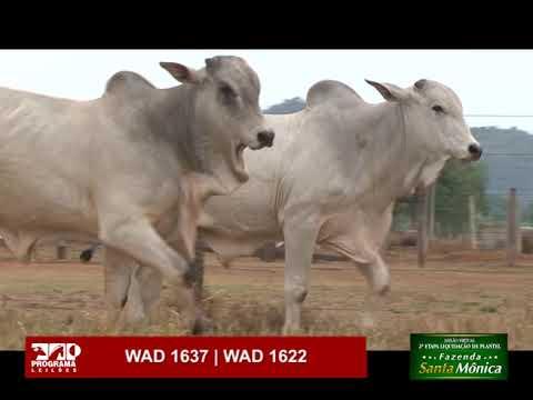 LOTE 65 - WAD 1637 | WAD 1622