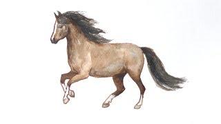 Уроки рисования. Как научиться рисовать лошадь(Как нарисовать лошадь ▻ Скачайте видео урок
