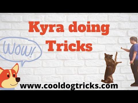 K9 Kyra | Kyra doing Tricks | Soldi K9 Training Dog Training
