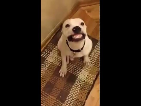 Funny dog smile's to his owner!